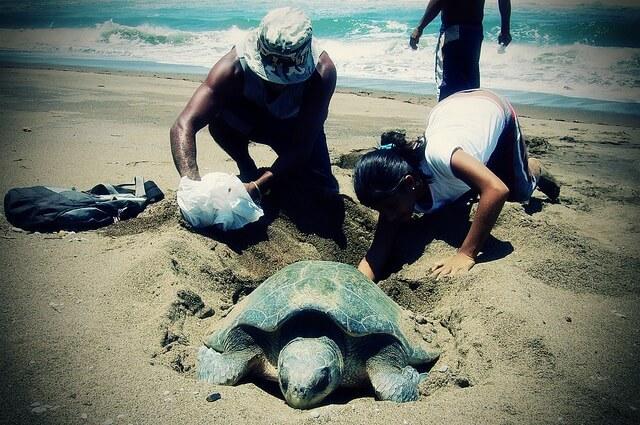 Volontaires et une tortue
